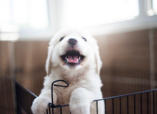如何预防小狗心丝虫病?
