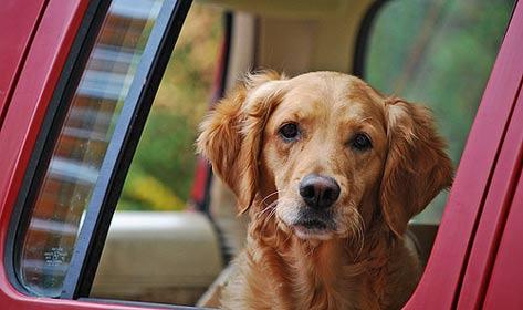 宠物旅行小贴士,宠物旅行准备工作