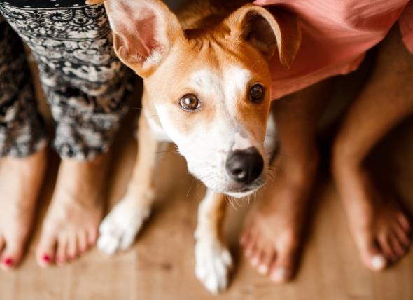 狗为什么坐或躺在你的脚上?