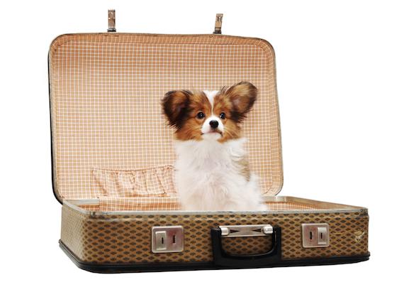 带宠物旅行的小提示