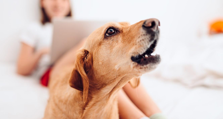 如何训练狗不吠叫