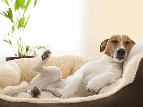 狗睡姿特殊含义