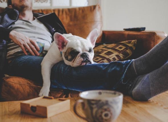 狗为什么睡的多?