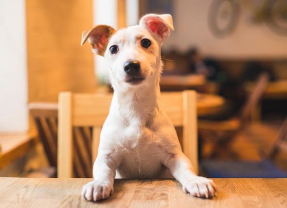 狗可以吃土豆和马铃薯吗?