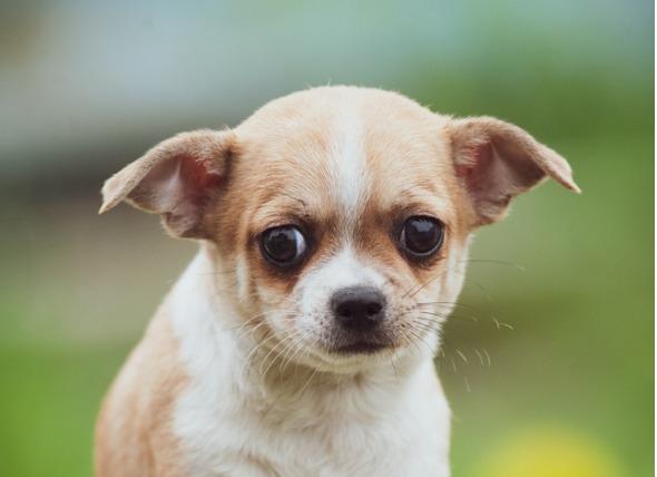 肠胃过敏的狗最佳食物是什么?