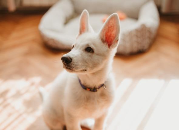 关于如何快速训练狗的技巧和见解