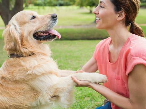 增进与狗的关系训练技巧