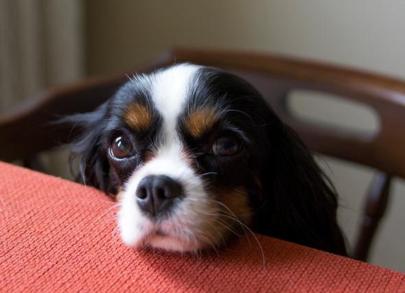 如果狗吃了鸡骨头该怎么办?