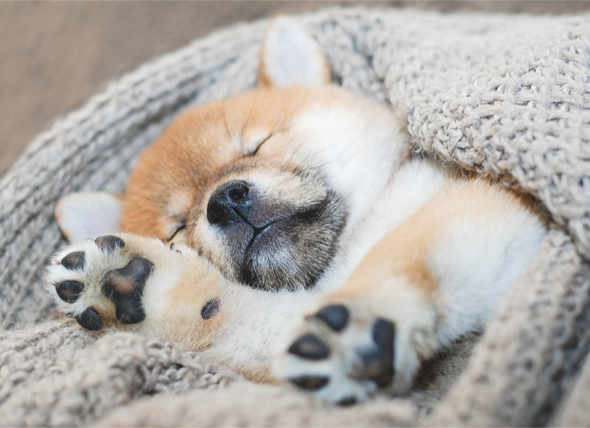 如何哄狗睡觉?哄狗睡觉指南