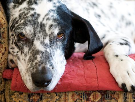 狗眼睛发红该怎么办?