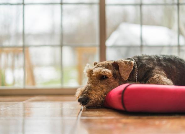 可以给狗吃止疼药吗?