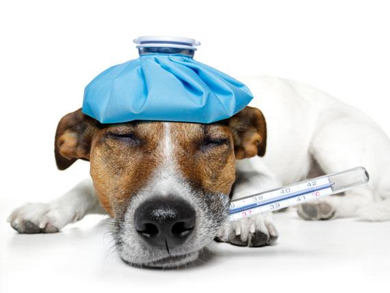 如何给狗选择止痛药?