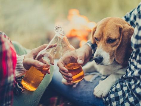 狗狗等宠物可以喝酒吗?