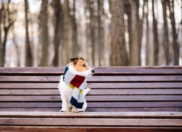 狗狗不喜欢社交,喜欢独来独往,内向怎么办?