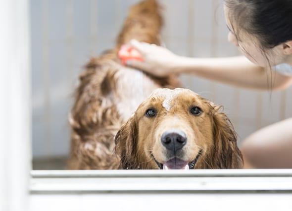 如何呵护狗狗的皮毛