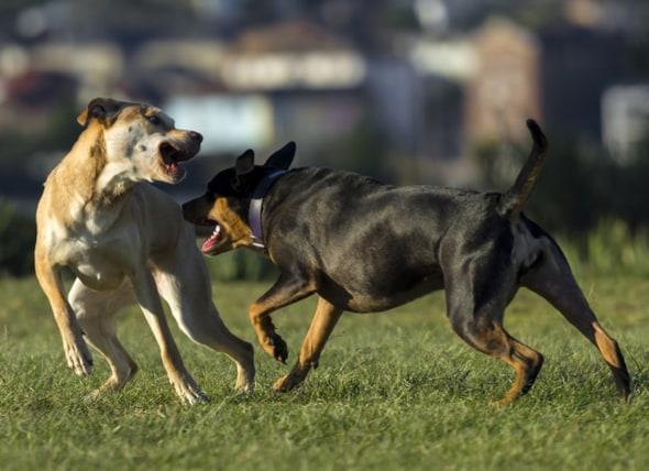 如何防止狗欺凌行为